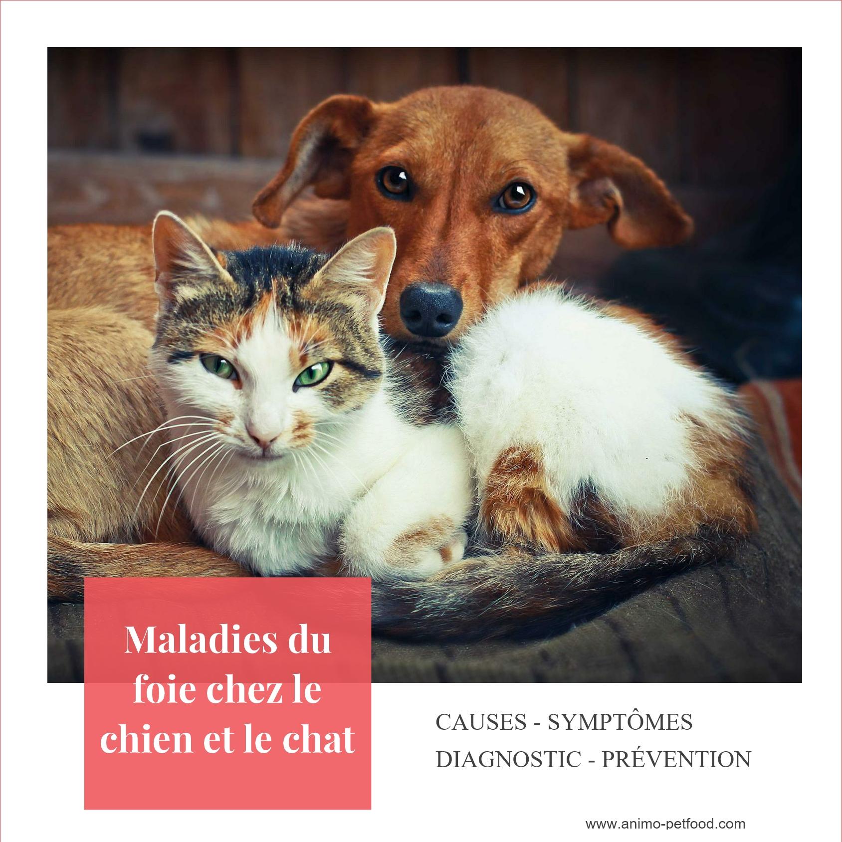 Les Maladies Du Foie Chez Le Chien Et Le Chat