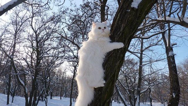 Conseils d'hiver pour votre chat