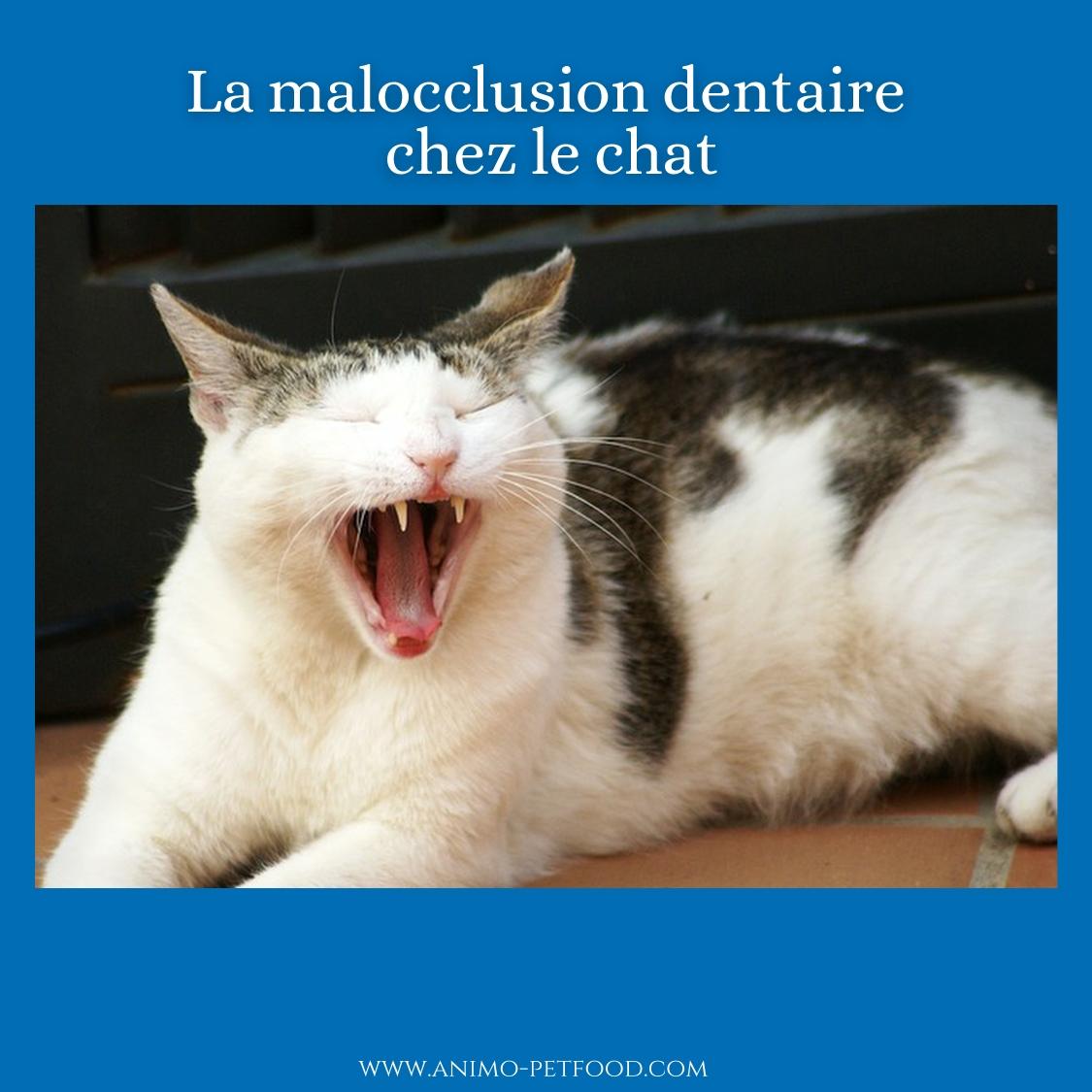 Problèmes dentaires chez les chats