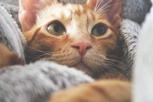 changement croquette chaton
