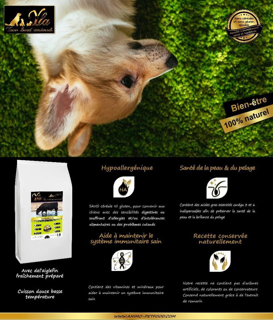 aliment-hypoallergenique-au-boeuf-angus-pour-petit-chien