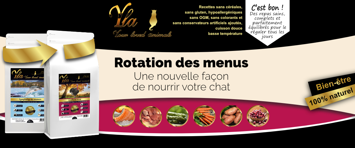 aliments-sans-cereales-pour-chat-saumon-dinde