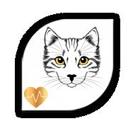 aurine pour chaton