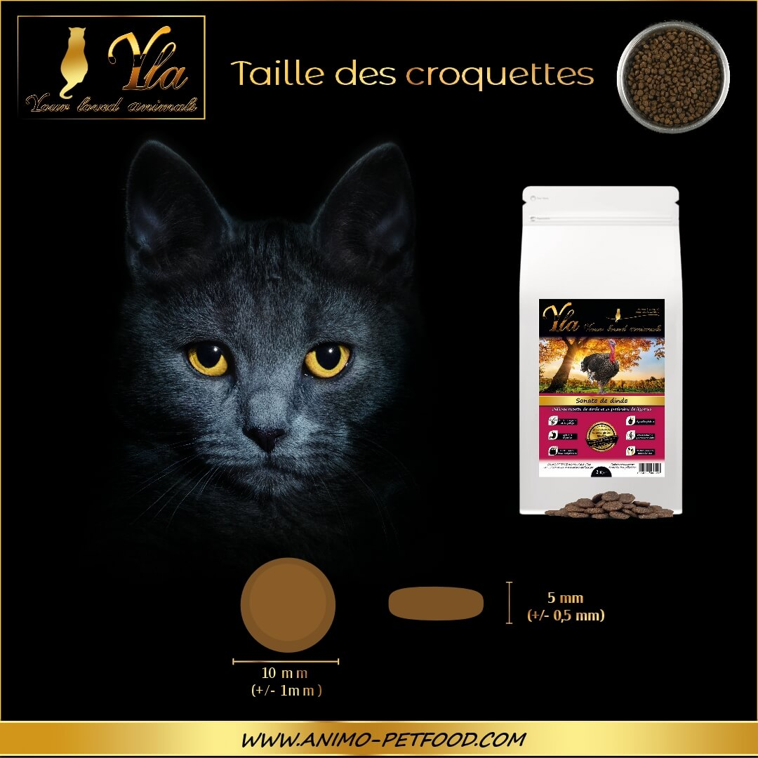 croquette-pour-chat-allergie-alimentaire