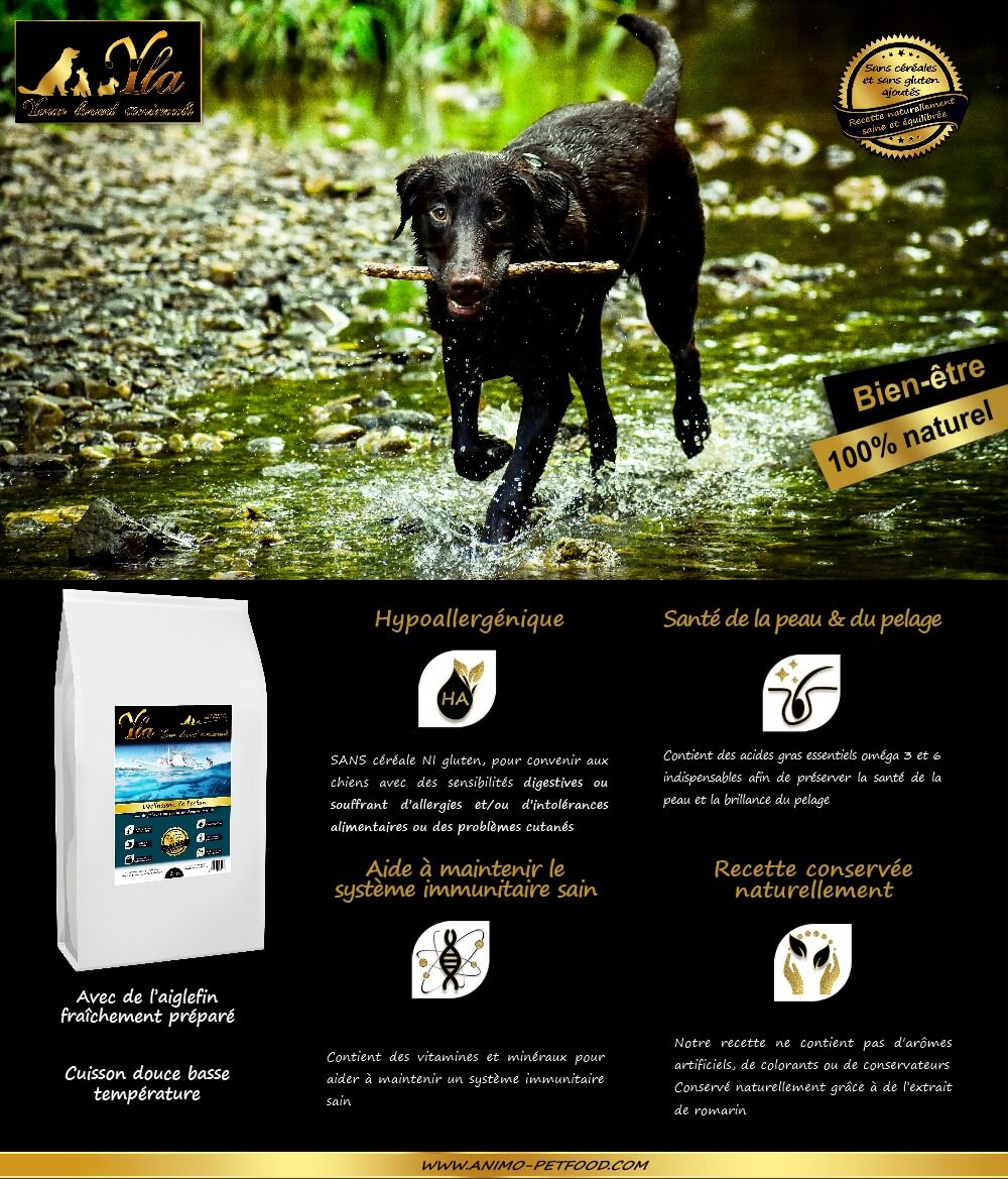 aliment-sans-cereales-chien-allergies-cutanees