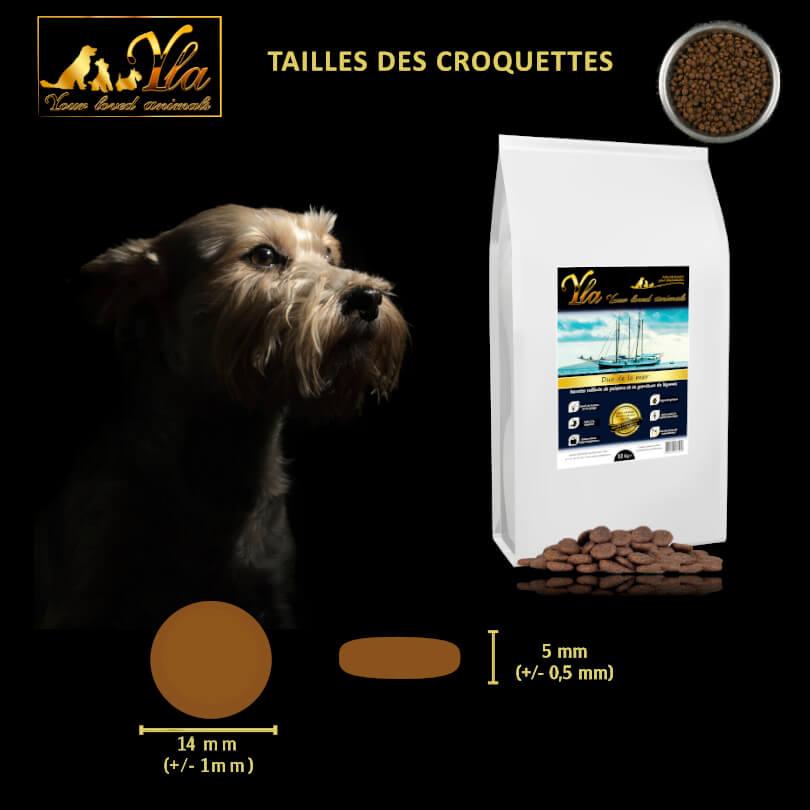 alimentation-canine-bien-choisir-la-taille-des-croquettes