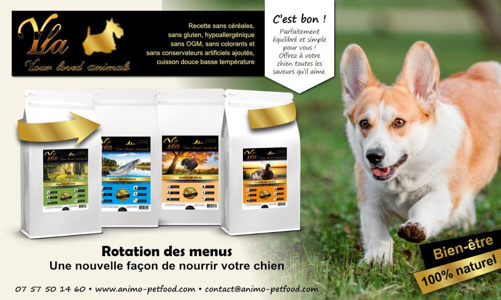 alimentation-intolerances-alimentaires-et-allergies-alimentaires-chien