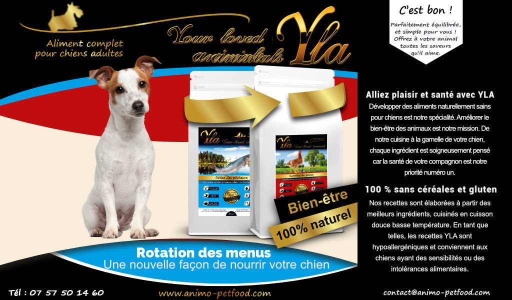 alimentation-pour-petit-chien-avec-sensiblite-alimentaire