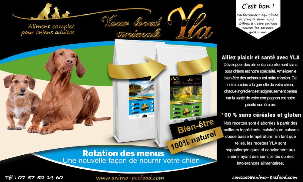 nourriture-chien-speciale-allergie-et-intolerance-alimentaire