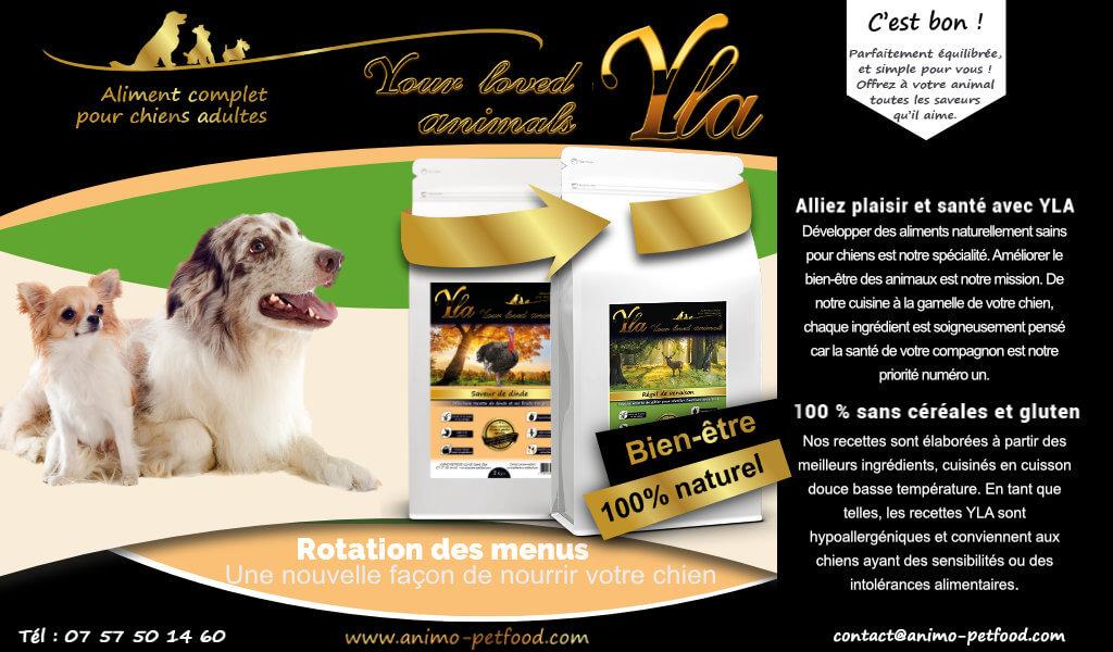 alimentation-speciale-intolerance-et-hypersensibilite-alimentaire-pour-chien