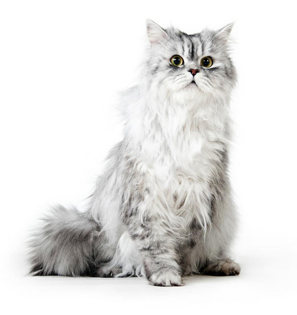 Chat -croquettes chat-croquettes sans céréales chat-grain free chat-croquettes naturelle chat-croquettes hypoallergéniques chat