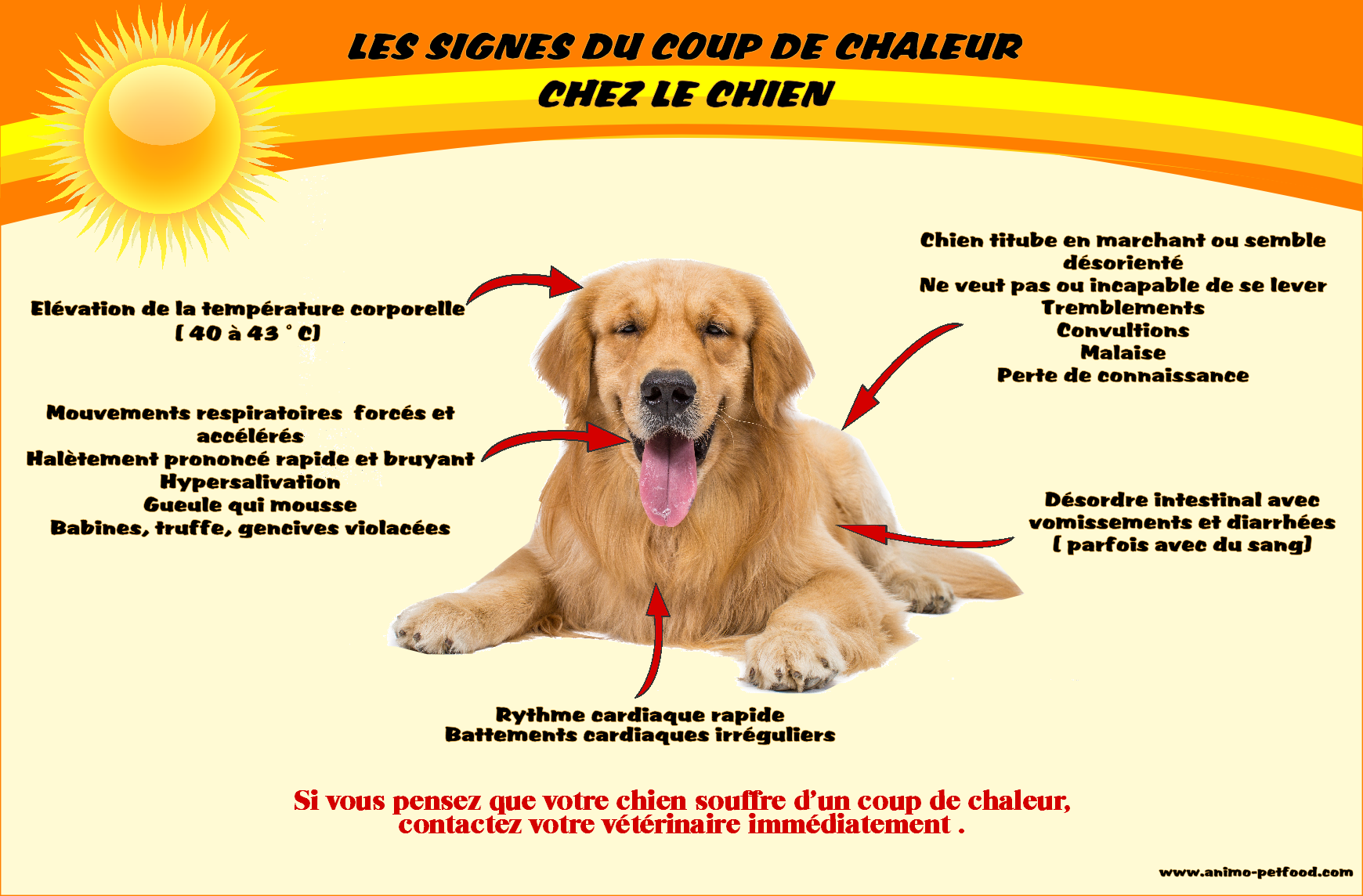 Attention au coup de chaleur chez le chien - Coup de chaleur chat symptomes ...