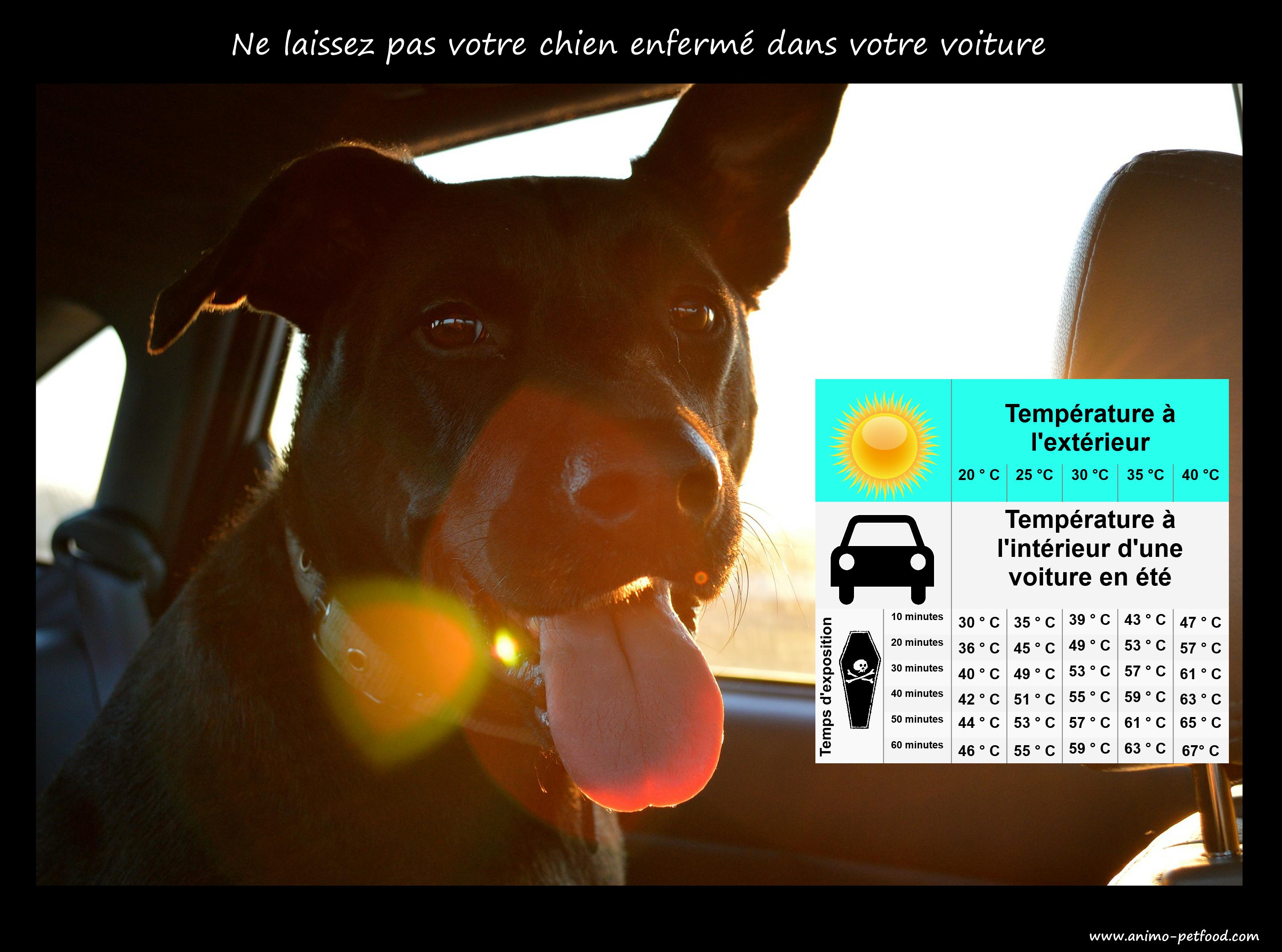 danger ne laissez pas votre chien enferme dans votre voiture. Black Bedroom Furniture Sets. Home Design Ideas