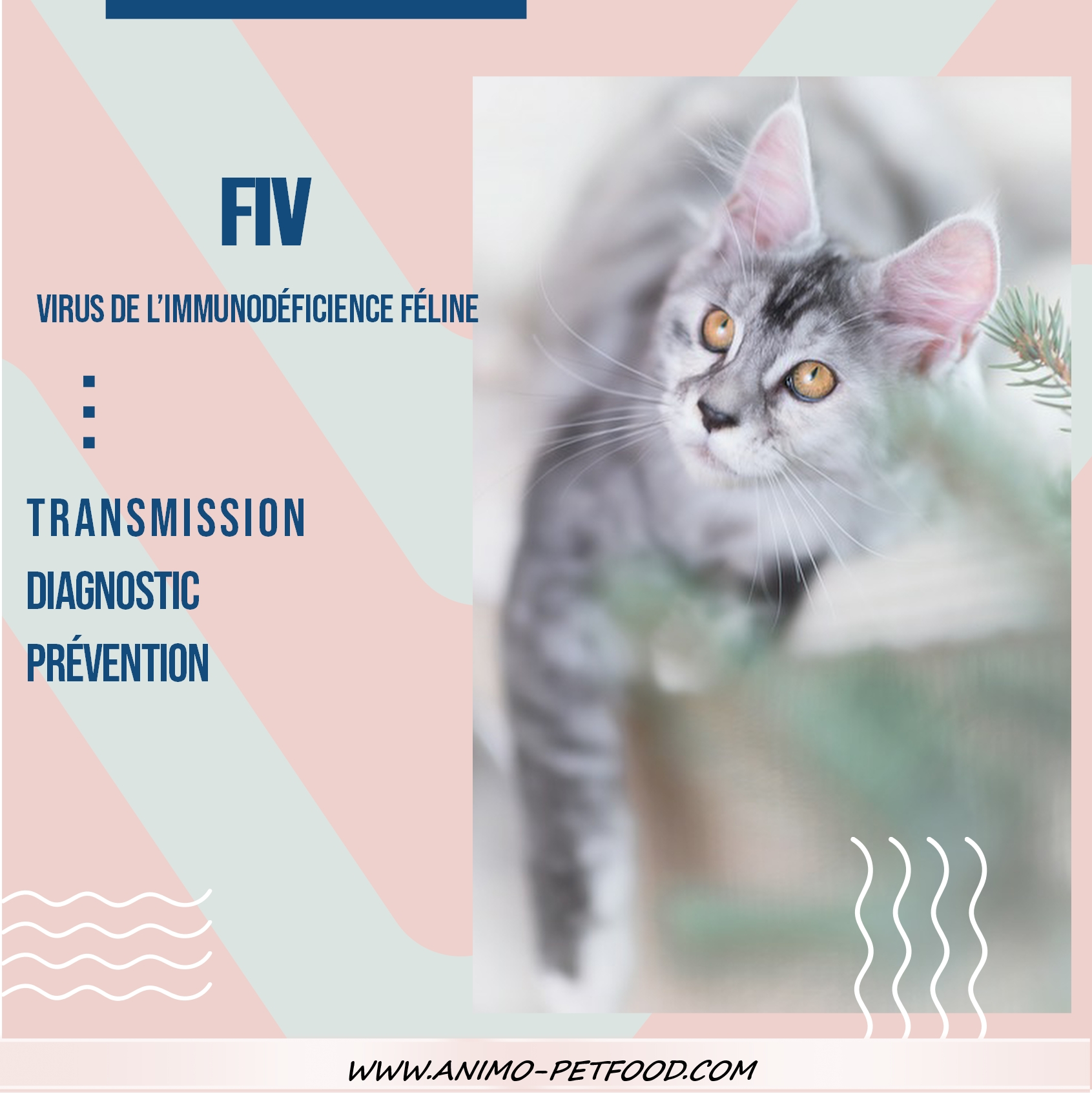 Virus de l'immunodéficience féline-FIV CHAT-virus chat- sida du chat
