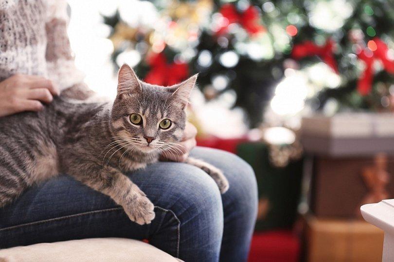 7 fa ons de garder votre chat calme pendant les vacances. Black Bedroom Furniture Sets. Home Design Ideas