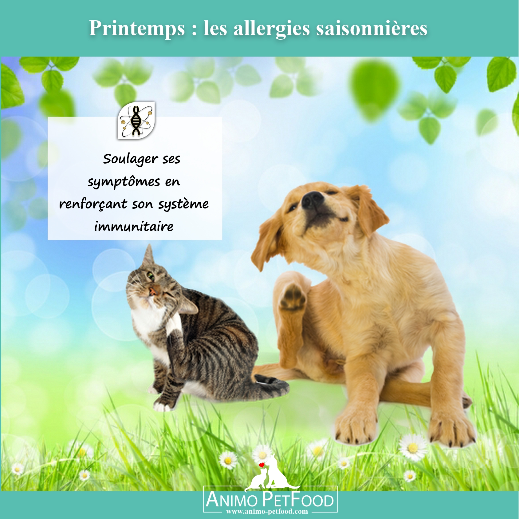 Les dangers du printemps pour les chiens et chats