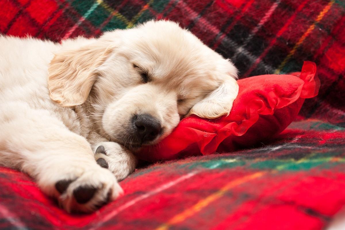 combien un chien dort il par jour. Black Bedroom Furniture Sets. Home Design Ideas