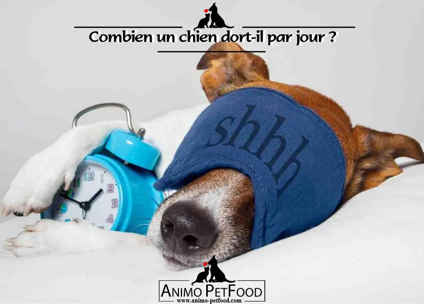 combien un chien dort il par jour