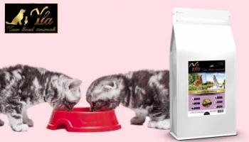 Alimentation du chaton : la transition alimentaire