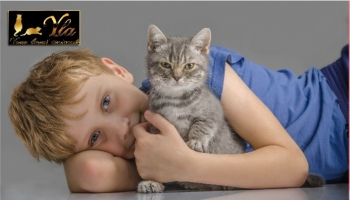 Alimentation: comment bien nourrir son chaton ?